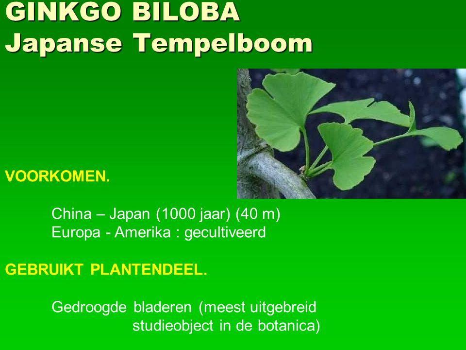 GINKGO BILOBA Japanse Tempelboom VOORKOMEN. China – Japan (1000 jaar) (40 m) Europa - Amerika : gecultiveerd GEBRUIKT PLANTENDEEL. Gedroogde bladeren