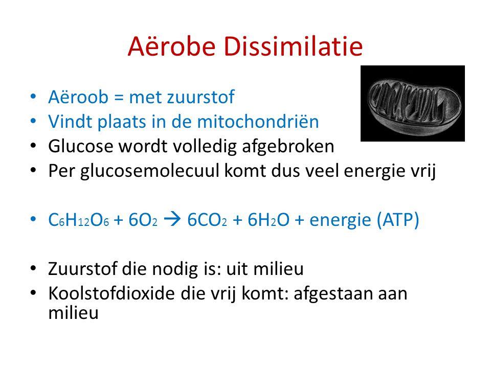Aërobe Dissimilatie Aëroob = met zuurstof Vindt plaats in de mitochondriën Glucose wordt volledig afgebroken Per glucosemolecuul komt dus veel energie
