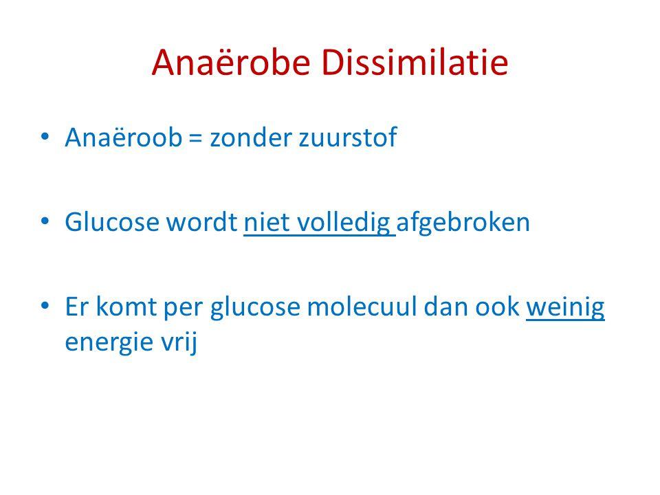 Anaërobe Dissimilatie Anaëroob = zonder zuurstof Glucose wordt niet volledig afgebroken Er komt per glucose molecuul dan ook weinig energie vrij