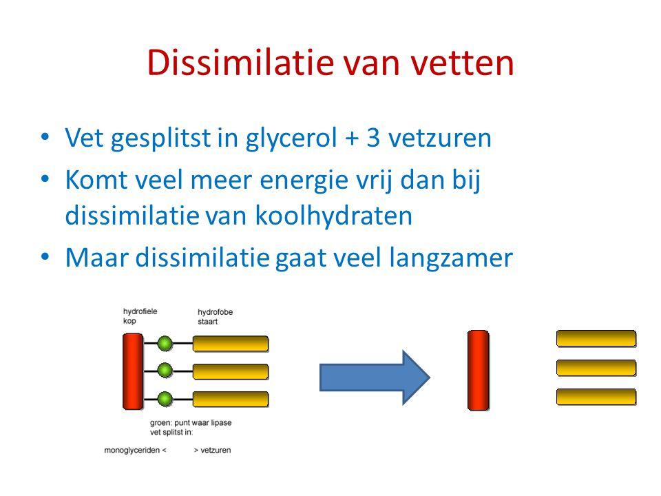 Dissimilatie van vetten Vet gesplitst in glycerol + 3 vetzuren Komt veel meer energie vrij dan bij dissimilatie van koolhydraten Maar dissimilatie gaa