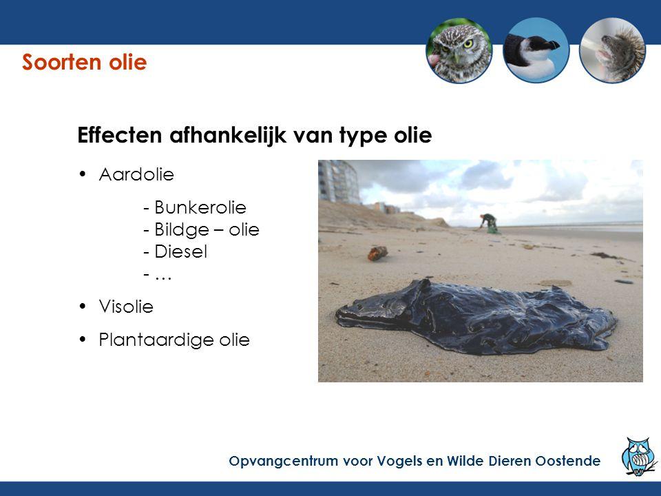 Crude oil = ruwe aardolie Bunkerolie = brandstof voor het schip Bildge = mengsel van water, smeerolie… Lichte oliën = diesel, mazout… Aardolie = minerale olie Soorten olie Opvangcentrum voor Vogels en Wilde Dieren Oostende