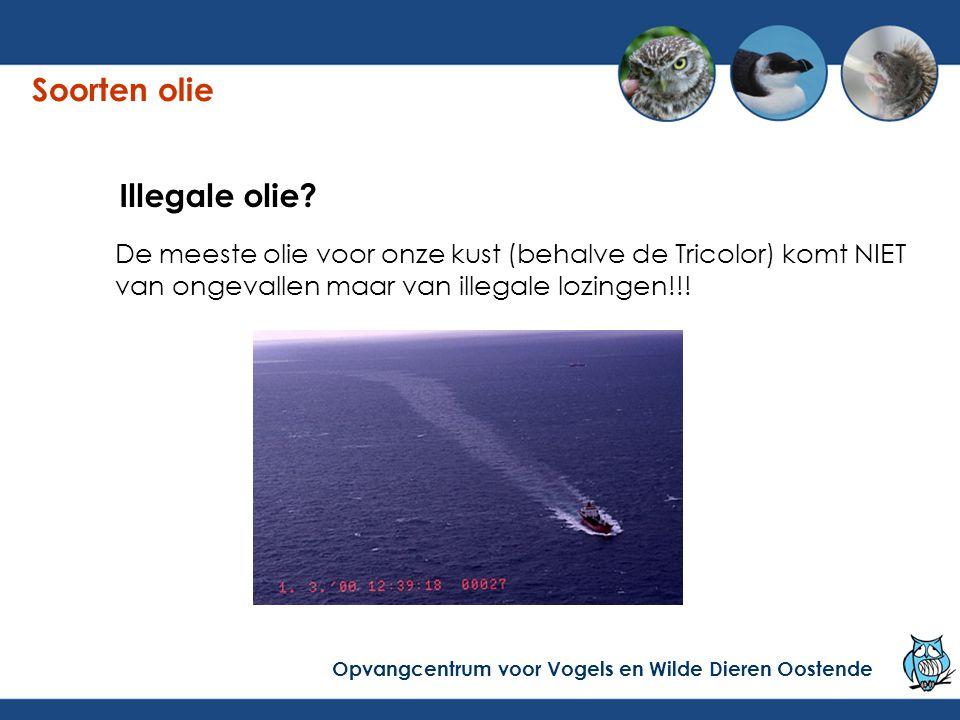 De meeste olie voor onze kust (behalve de Tricolor) komt NIET van ongevallen maar van illegale lozingen!!.