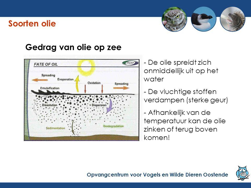 Gedrag van olie op zee - De olie spreidt zich onmiddellijk uit op het water - De vluchtige stoffen verdampen (sterke geur) - Afhankelijk van de temperatuur kan de olie zinken of terug boven komen.