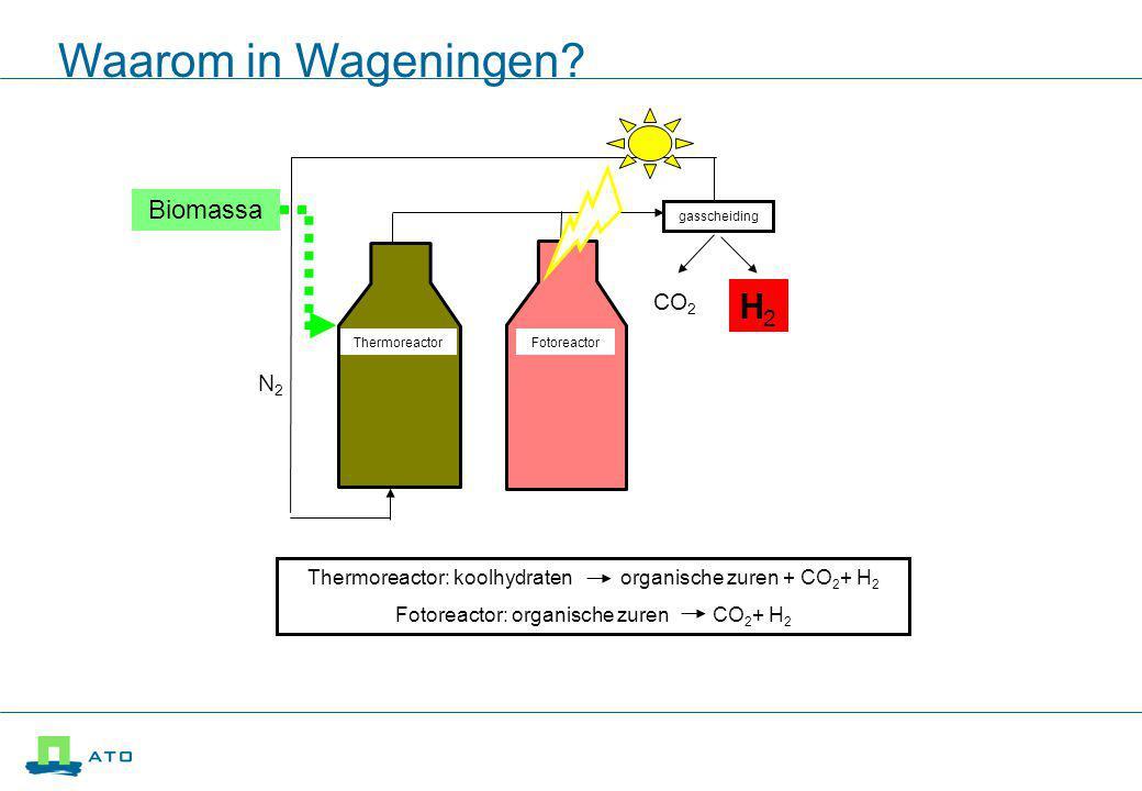 gasscheiding Thermoreactor Fotoreactor Biomassa CO 2 N2N2 H2H2 Thermoreactor: koolhydraten organische zuren + CO 2 + H 2 Fotoreactor: organische zuren CO 2 + H 2 Waarom in Wageningen