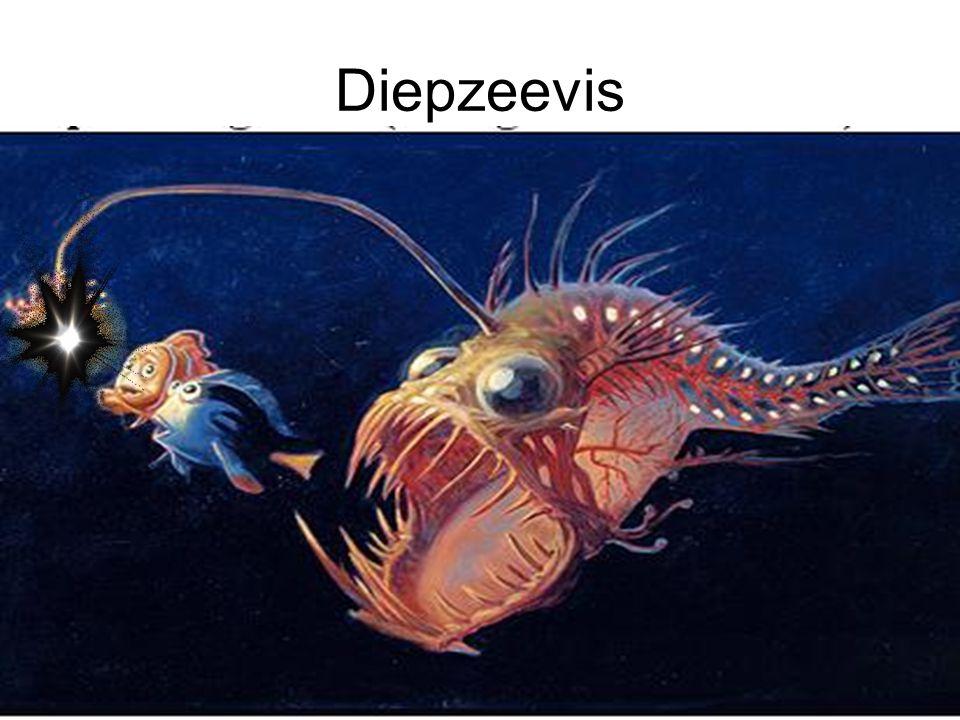 Diepzeevis
