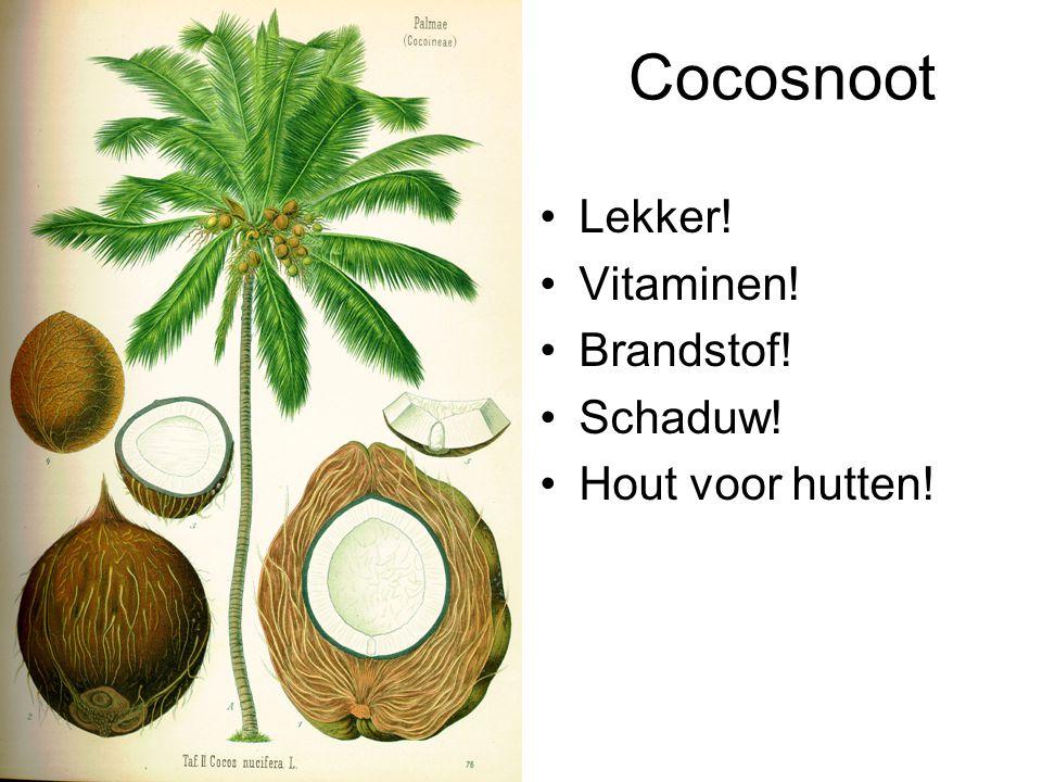 Cocosnoot Lekker! Vitaminen! Brandstof! Schaduw! Hout voor hutten!