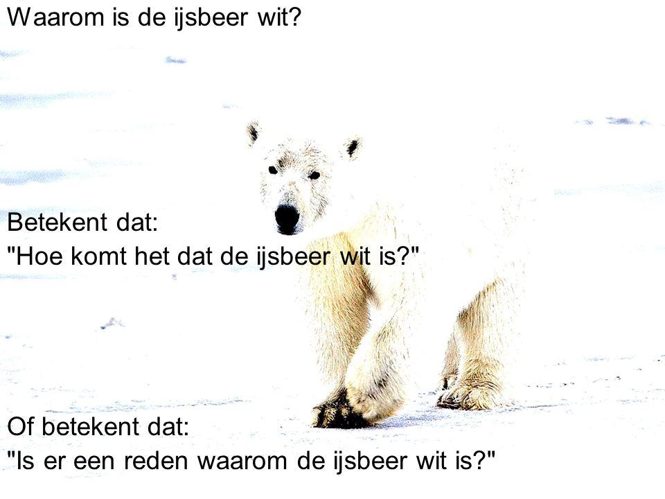 Waarom is de ijsbeer wit.