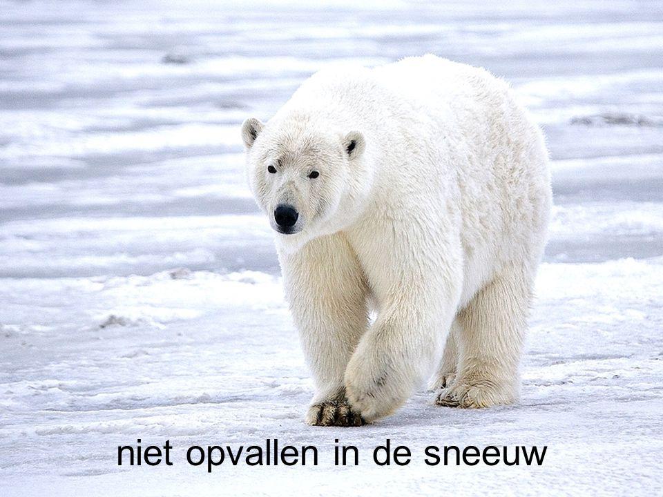 niet opvallen in de sneeuw