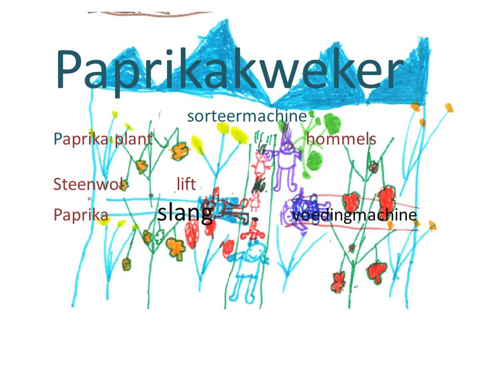 Paprikakweker sorteermachine Paprika plant hommels Steenwol lift Paprika slang voedingmachine