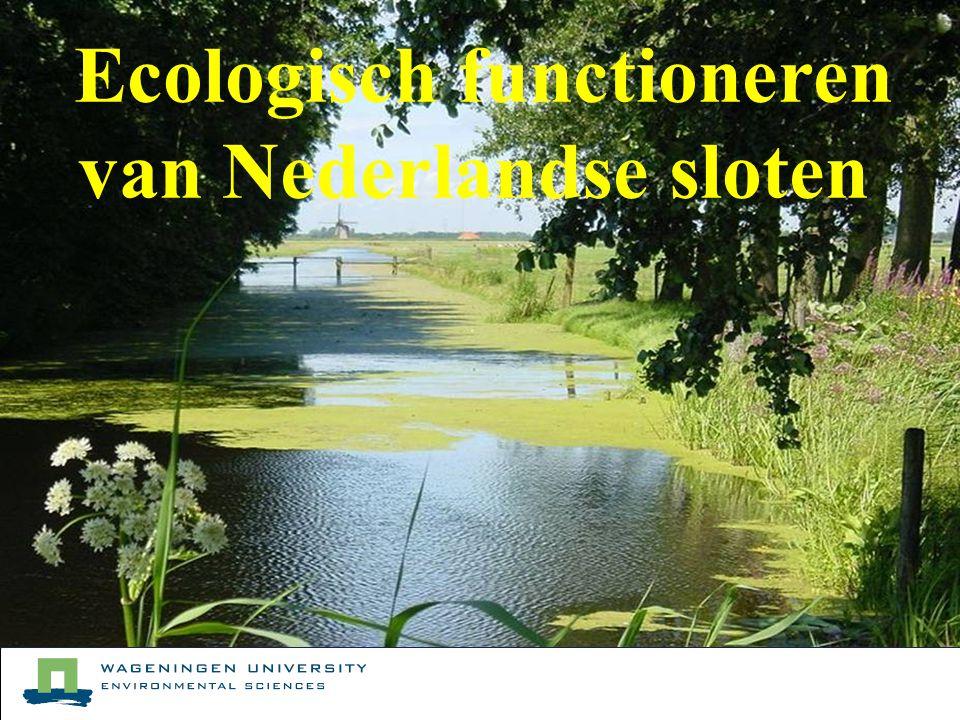 Ecologisch functioneren van Nederlandse sloten PLONS Ecologisch functioneren van Nederlandse sloten