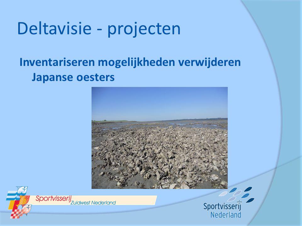 Deltavisie - projecten Inventariseren mogelijkheden verwijderen Japanse oesters