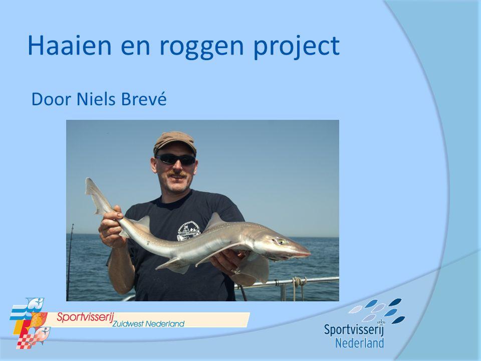 Haaien en roggen project Door Niels Brevé