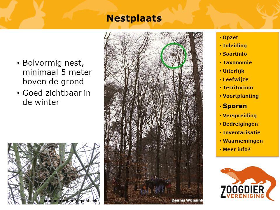 Nestplaats Bolvormig nest, minimaal 5 meter boven de grond Goed zichtbaar in de winter Opzet Inleiding Soortinfo Taxonomie Uiterlijk Leefwijze Territo