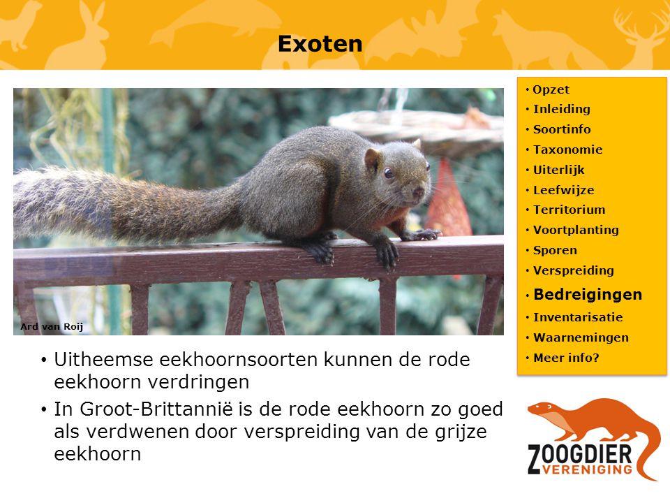 Exoten Uitheemse eekhoornsoorten kunnen de rode eekhoorn verdringen In Groot-Brittannië is de rode eekhoorn zo goed als verdwenen door verspreiding va