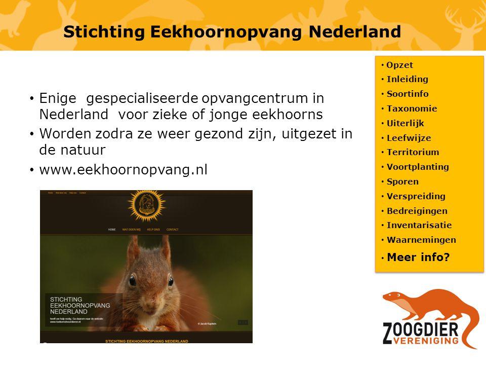 Stichting Eekhoornopvang Nederland Opzet Inleiding Soortinfo Taxonomie Uiterlijk Leefwijze Territorium Voortplanting Sporen Verspreiding Bedreigingen