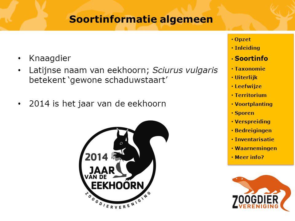 Soortinformatie algemeen Knaagdier Latijnse naam van eekhoorn; Sciurus vulgaris betekent 'gewone schaduwstaart' 2014 is het jaar van de eekhoorn Opzet