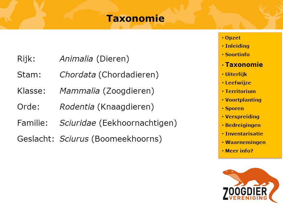 Taxonomie Rijk: Animalia (Dieren) Stam: Chordata (Chordadieren) Klasse:Mammalia (Zoogdieren) Orde: Rodentia (Knaagdieren) Familie: Sciuridae (Eekhoorn