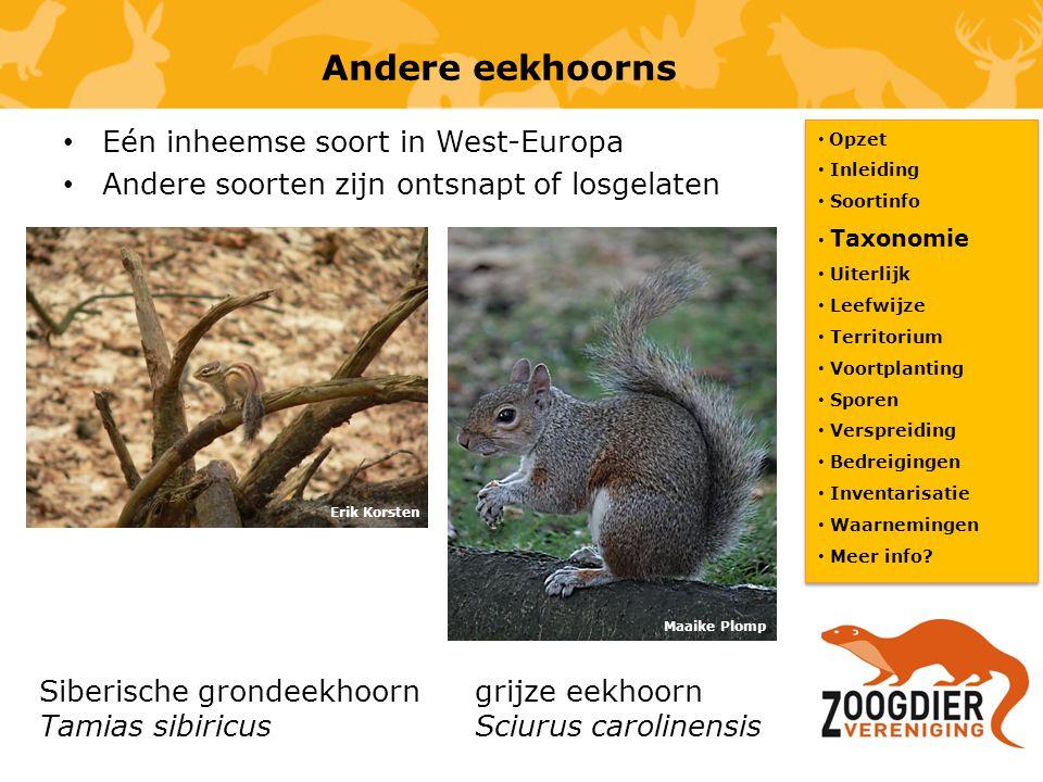Andere eekhoorns Eén inheemse soort in West-Europa Andere soorten zijn ontsnapt of losgelaten Opzet Inleiding Soortinfo Taxonomie Uiterlijk Leefwijze