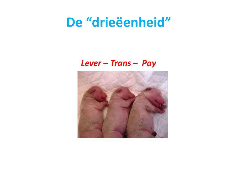 "De ""drieëenheid"" Lever – Trans – Pay"