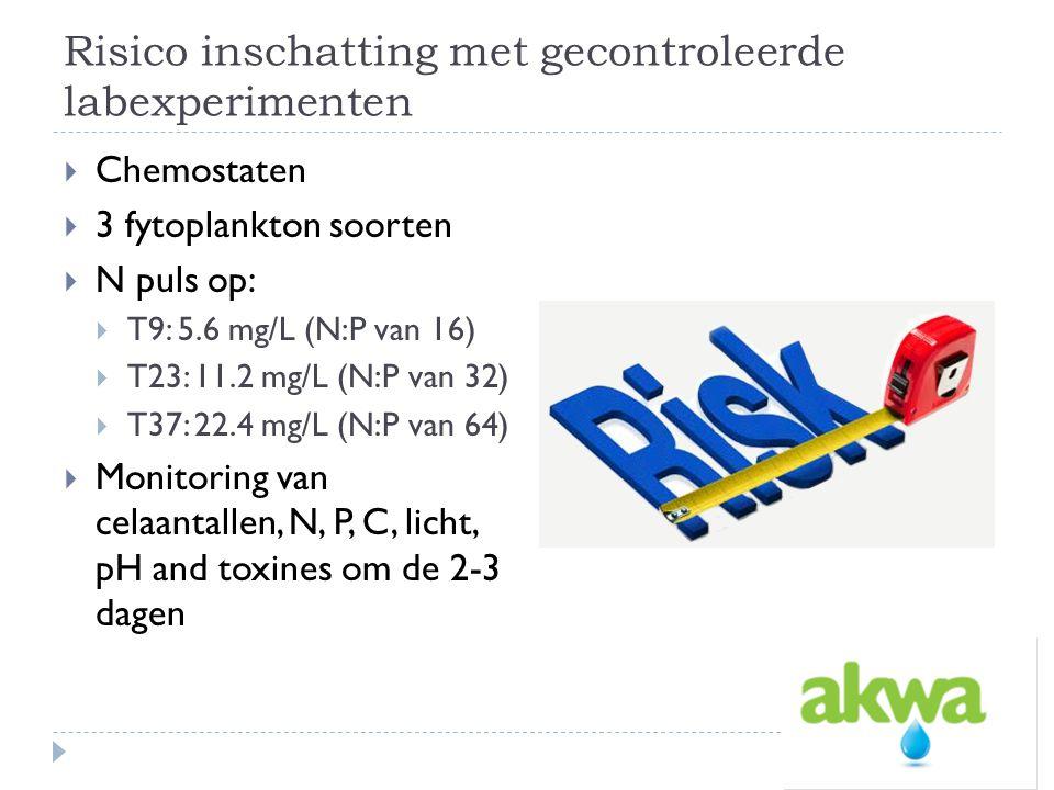 Risico inschatting met gecontroleerde labexperimenten  Chemostaten  3 fytoplankton soorten  N puls op:  T9: 5.6 mg/L (N:P van 16)  T23: 11.2 mg/L (N:P van 32)  T37: 22.4 mg/L (N:P van 64)  Monitoring van celaantallen, N, P, C, licht, pH and toxines om de 2-3 dagen