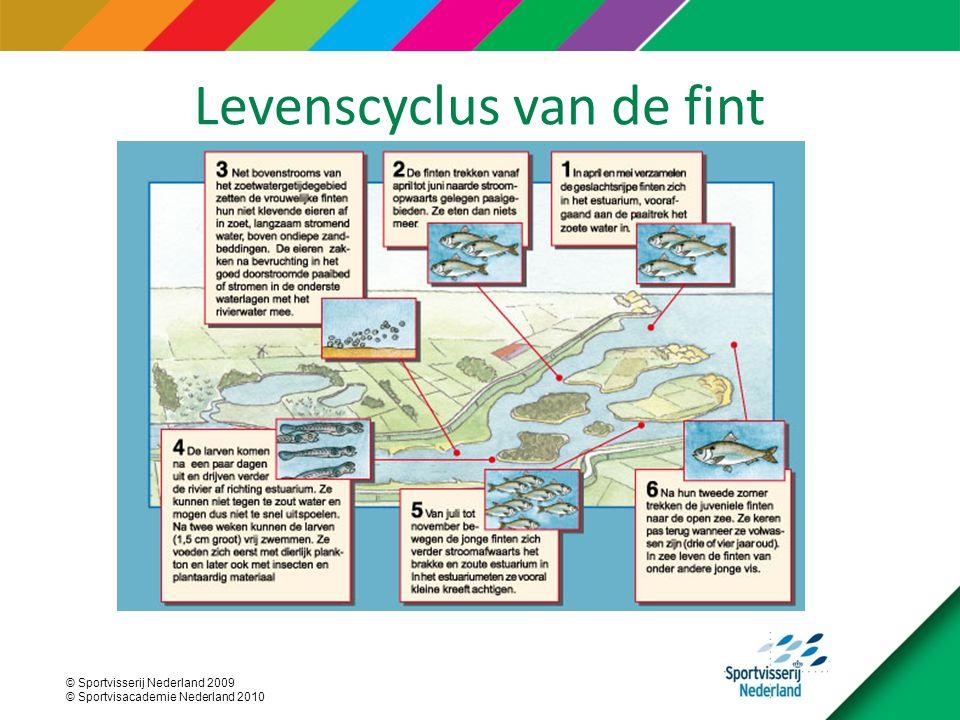 © Sportvisserij Nederland 2009 © Sportvisacademie Nederland 2010 Levenscyclus van de fint