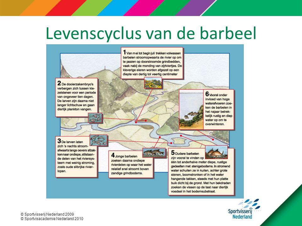 © Sportvisserij Nederland 2009 © Sportvisacademie Nederland 2010 Levenscyclus van de barbeel