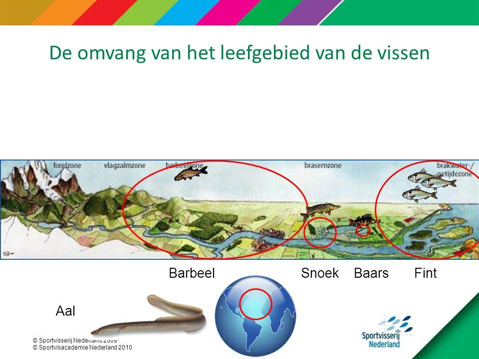 © Sportvisserij Nederland 2009 © Sportvisacademie Nederland 2010 FintBaarsSnoekBarbeel Aal De omvang van het leefgebied van de vissen