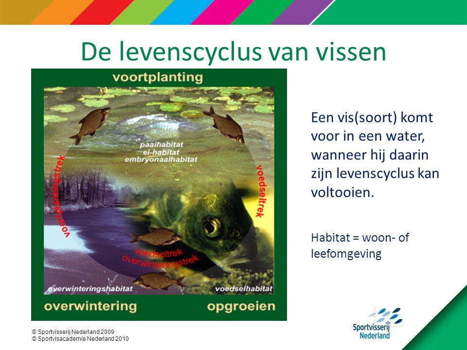© Sportvisserij Nederland 2009 © Sportvisacademie Nederland 2010 De levenscyclus van vissen Een vis(soort) komt voor in een water, wanneer hij daarin zijn levenscyclus kan voltooien.