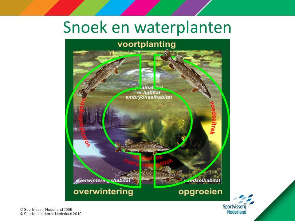 © Sportvisserij Nederland 2009 © Sportvisacademie Nederland 2010 Snoek en waterplanten
