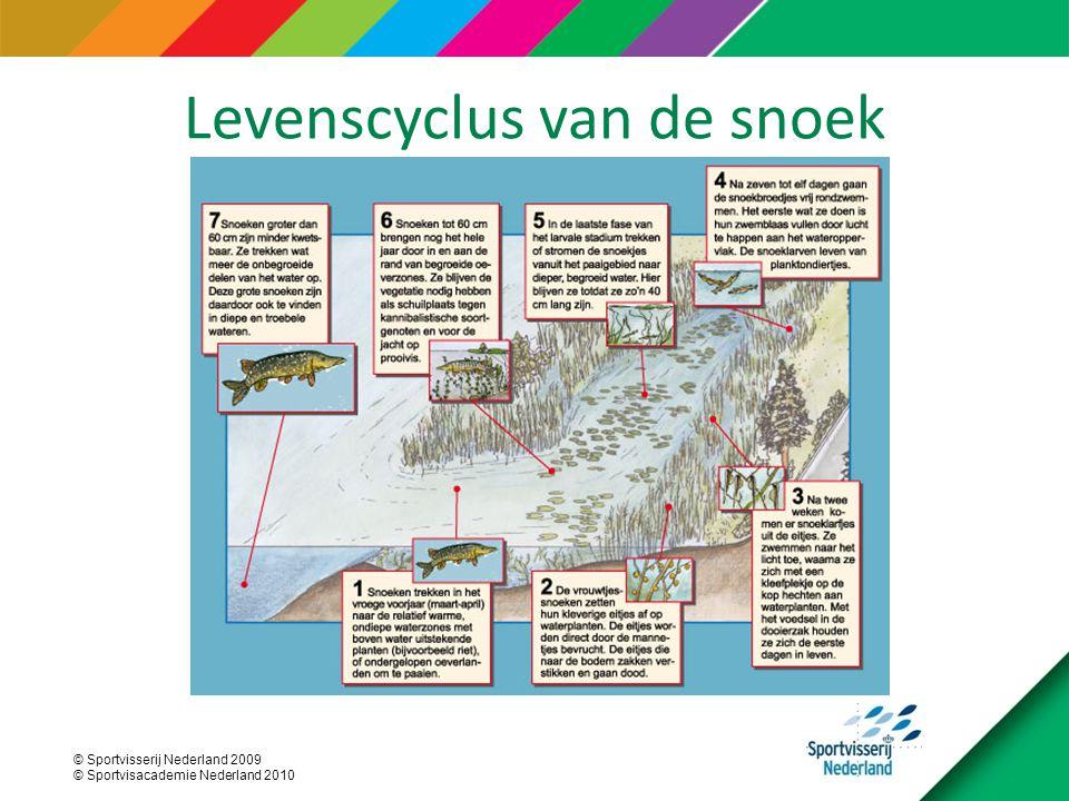 © Sportvisserij Nederland 2009 © Sportvisacademie Nederland 2010 Levenscyclus van de snoek