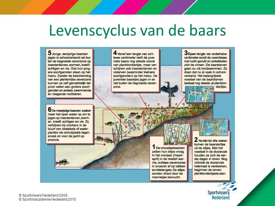 © Sportvisserij Nederland 2009 © Sportvisacademie Nederland 2010 Levenscyclus van de baars