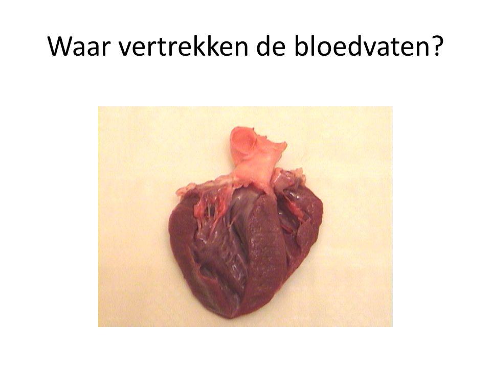Waar vertrekken de bloedvaten?