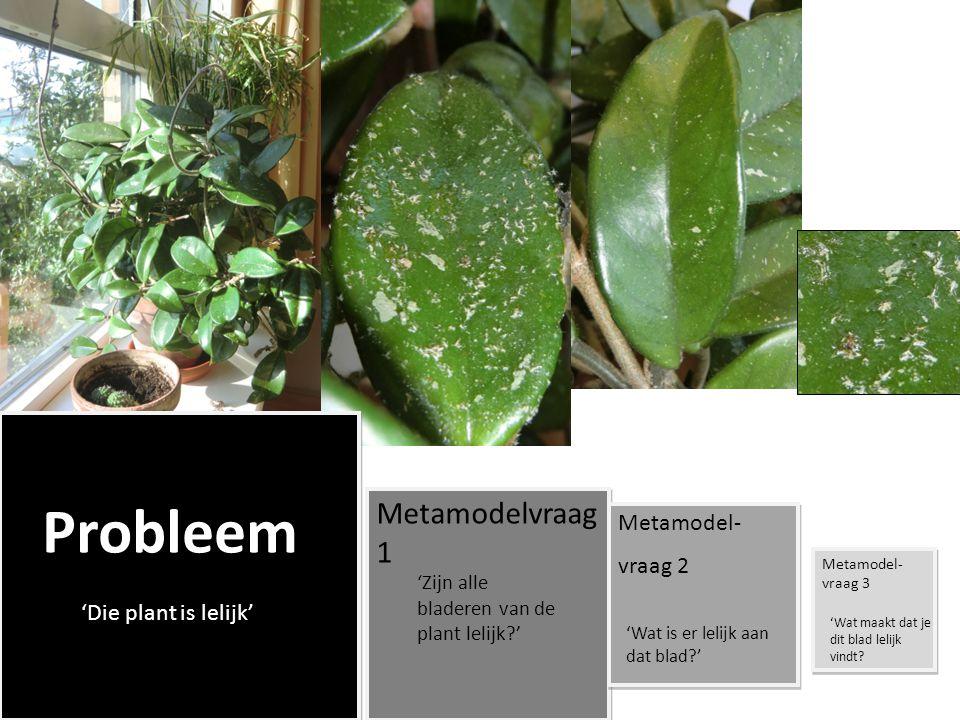 Probleem 'Die plant is lelijk' Metamodelvraag 1 'Zijn alle bladeren van de plant lelijk?' Metamodel- vraag 2 Metamodel- vraag 2 'Wat is er lelijk aan dat blad?' Metamodel- vraag 3 'Wat maakt dat je dit blad lelijk vindt?