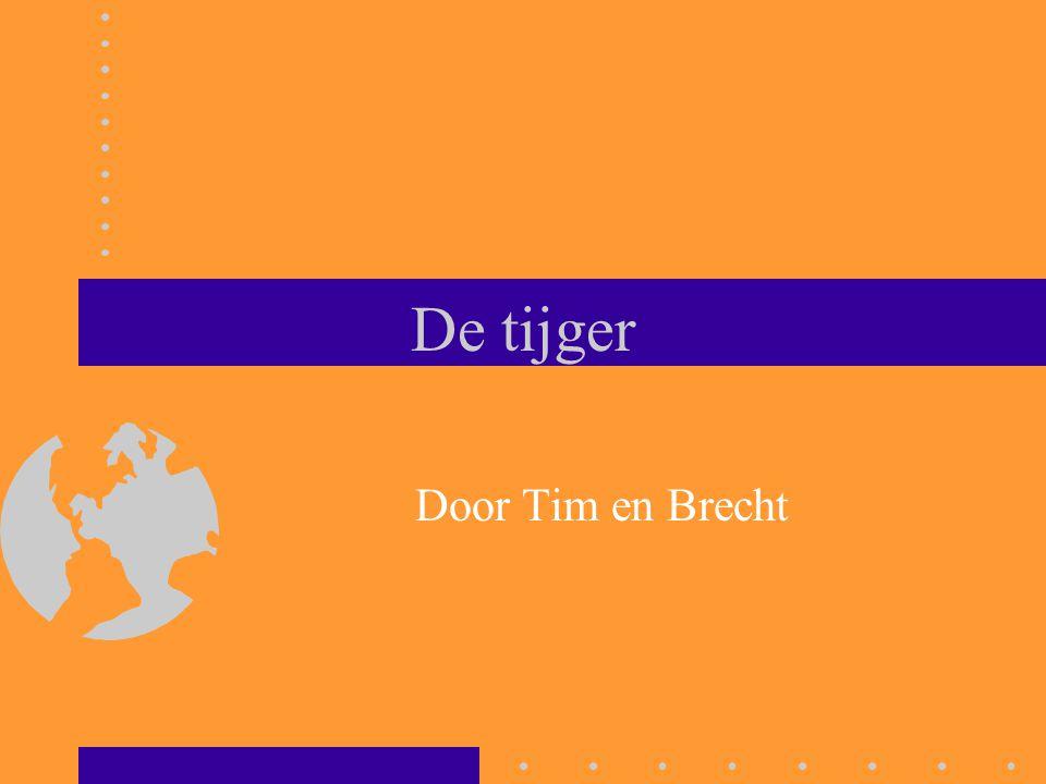 De tijger Door Tim en Brecht