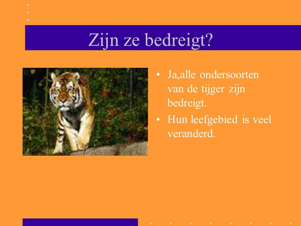 Zijn ze bedreigt? Ja,alle ondersoorten van de tijger zijn bedreigt. Hun leefgebied is veel veranderd.