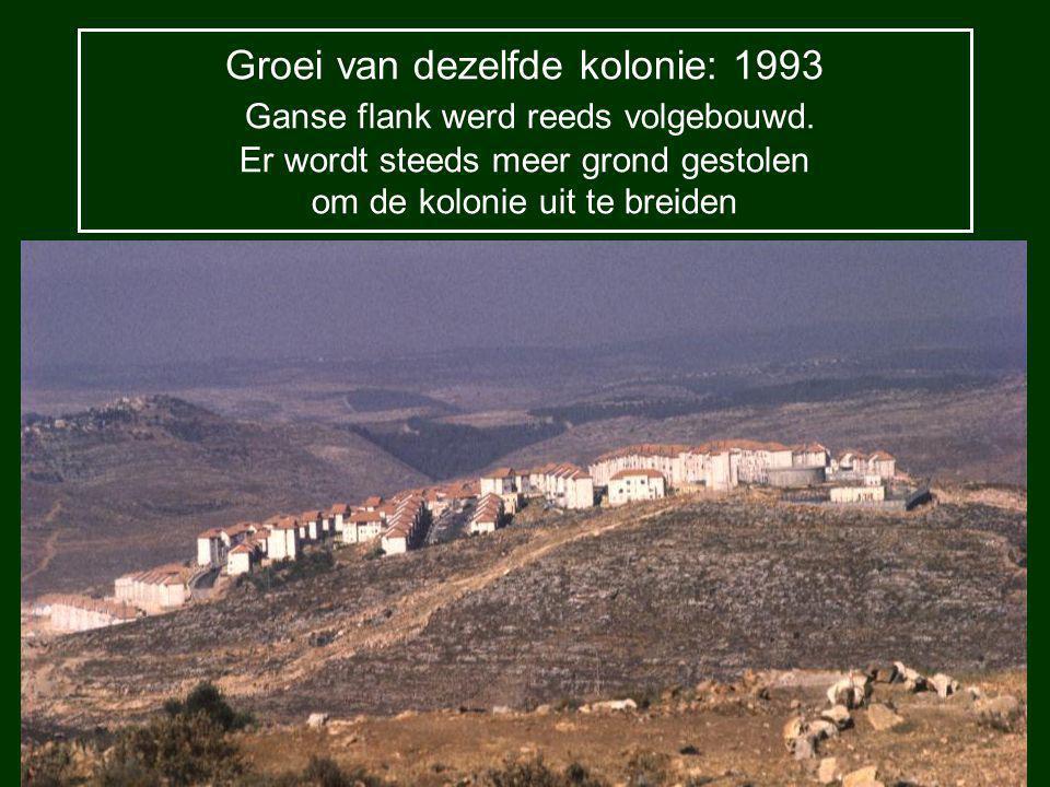 Groei van dezelfde kolonie: 1993 Ganse flank werd reeds volgebouwd.