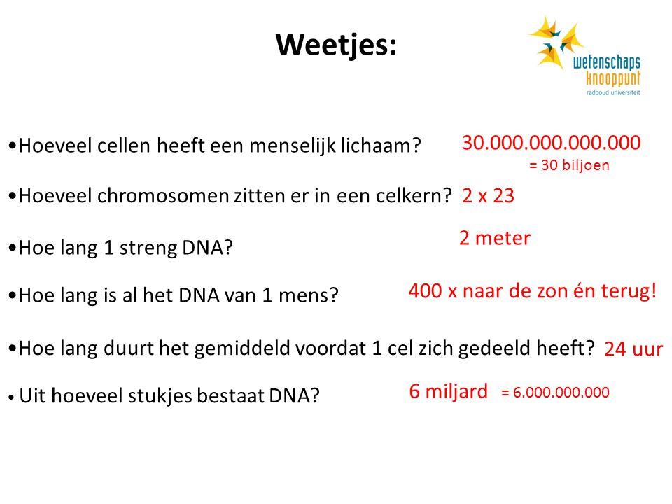 Weetjes: Hoeveel cellen heeft een menselijk lichaam? Hoeveel chromosomen zitten er in een celkern? Hoe lang is al het DNA van 1 mens? Hoe lang duurt h