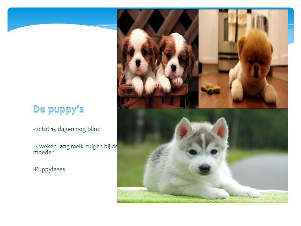 -10 tot 15 dagen nog blind -3 weken lang melk zuigen bij de moeder -Puppyfases