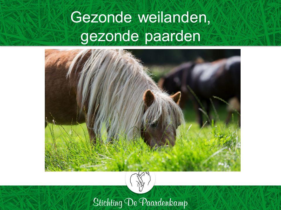 Gezonde weilanden, gezonde paarden