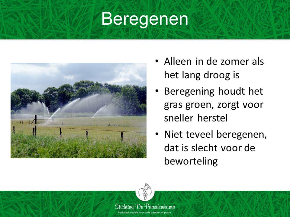 Beregenen Alleen in de zomer als het lang droog is Beregening houdt het gras groen, zorgt voor sneller herstel Niet teveel beregenen, dat is slecht voor de beworteling