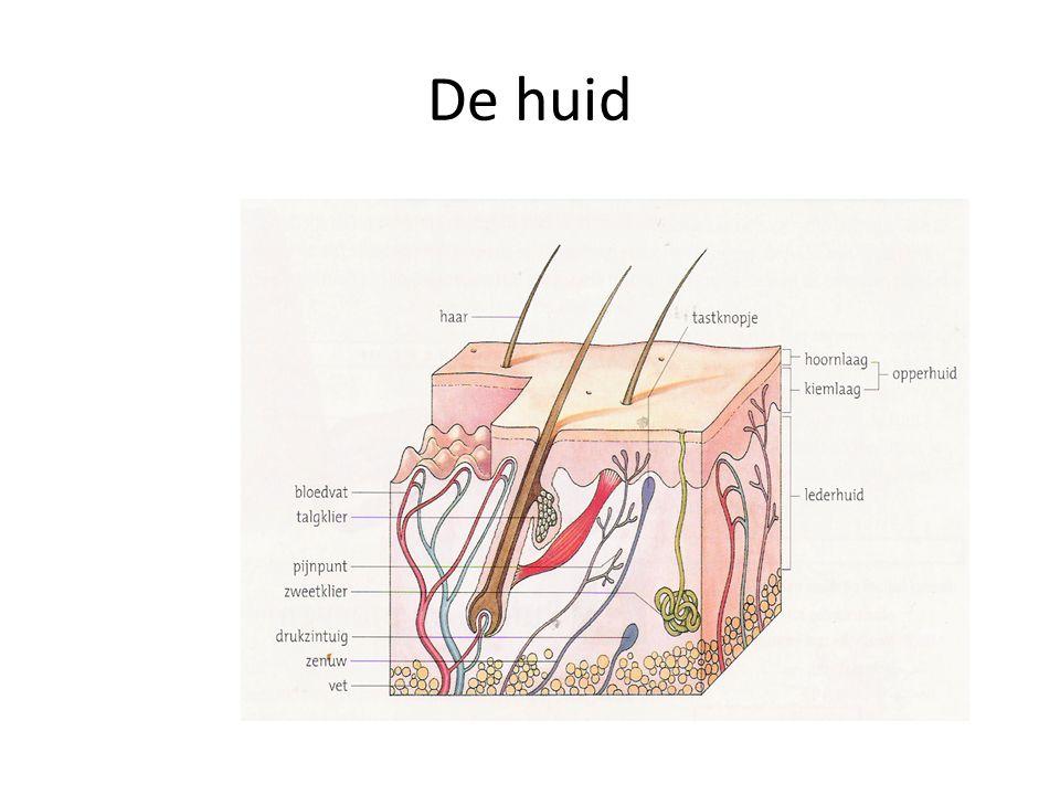 Bijtwonden Een bijtwond is een wond van huid of slijmvlies, veroorzaakt door de beet van mens of dier.
