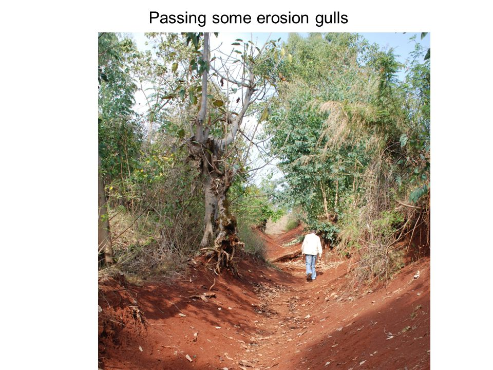 Passing some erosion gulls