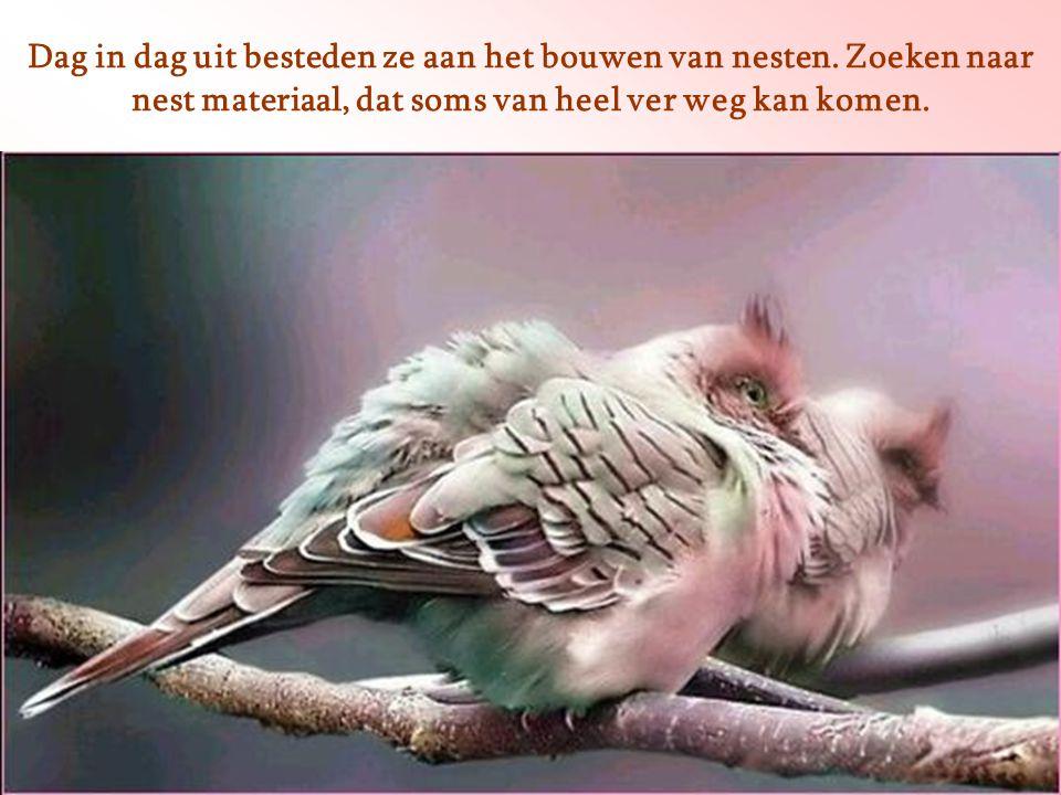Heb je de vogels wel eens bekeken. Onder welke omstandigheden zij moeten leven?