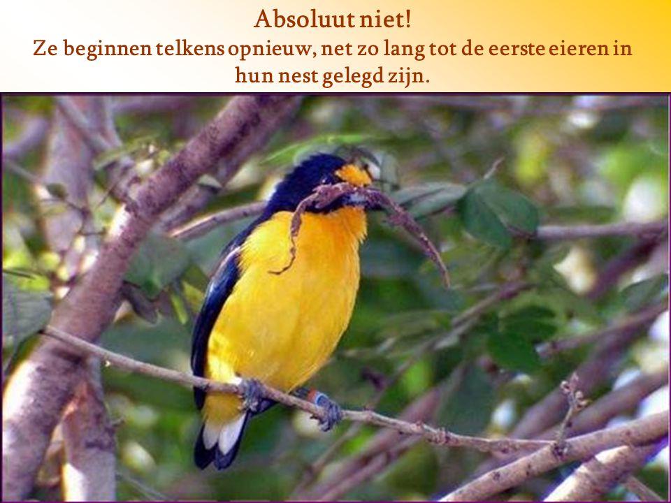 En wat doen de vogels dan? Stoppen ze of geven ze op?