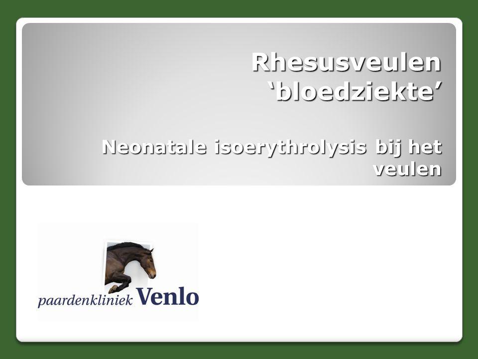 Rhesusveulen 'bloedziekte' Neonatale isoerythrolysis bij het veulen