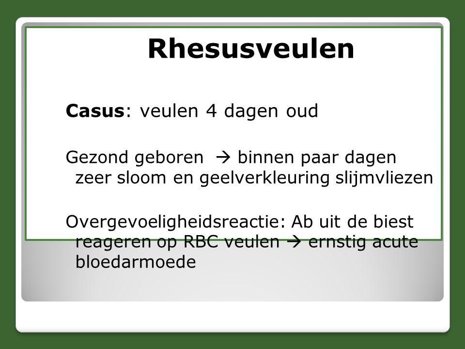 Rhesusveulen Casus: veulen 4 dagen oud Gezond geboren  binnen paar dagen zeer sloom en geelverkleuring slijmvliezen Overgevoeligheidsreactie: Ab uit