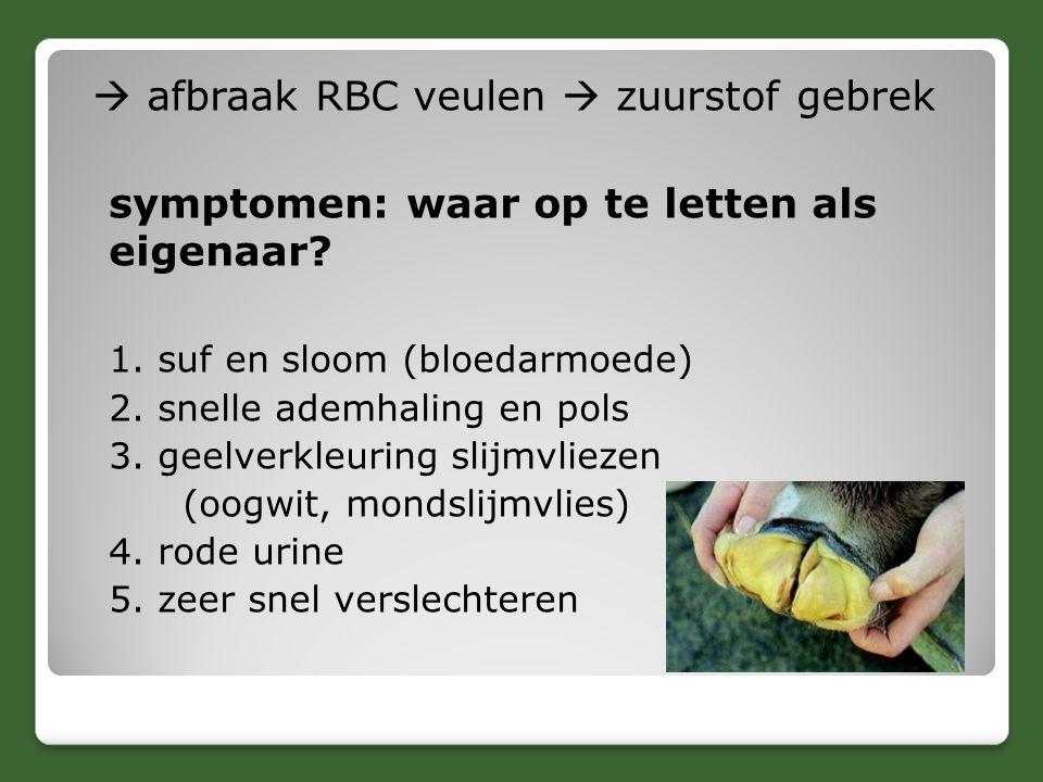  afbraak RBC veulen  zuurstof gebrek symptomen: waar op te letten als eigenaar? 1. suf en sloom (bloedarmoede) 2. snelle ademhaling en pols 3. geelv