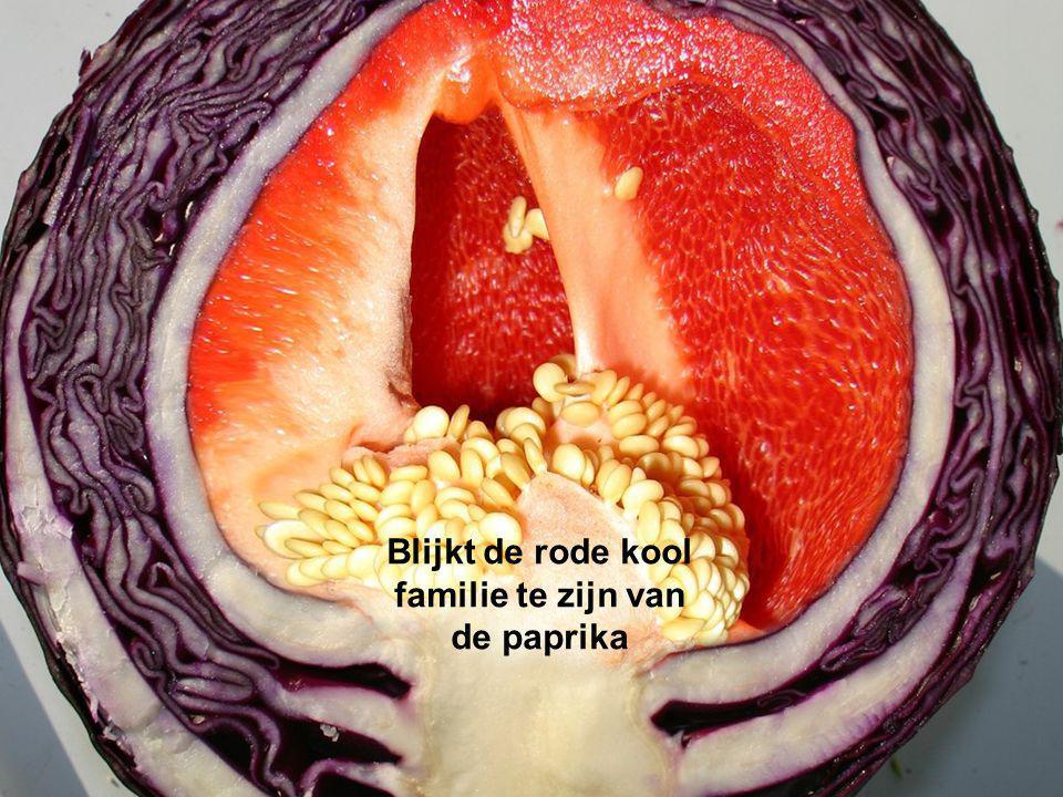Blijkt de rode kool familie te zijn van de paprika