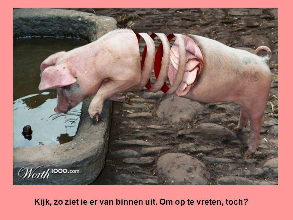 Dan zit er aan een nijlpaard beduidend meer ham dan aan een varken…..