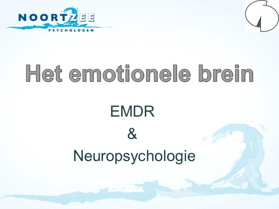EMDR & Neuropsychologie